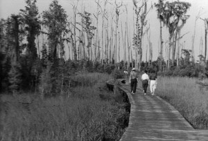 Okefenokee+Boardwalk+2